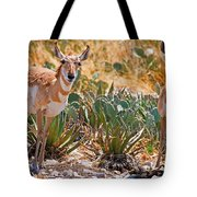 Pronghorn Antelope Tote Bag