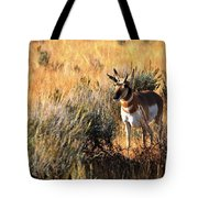 Pronghorn Buck Tote Bag