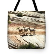 Pronghorn Deer Tote Bag