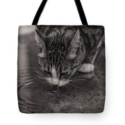 Puddle Drinking Kitty Tote Bag