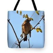 Puffed Breasted Robin Tote Bag