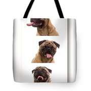 Pug Photo Booth Tote Bag