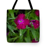 Purple And Red Tote Bag