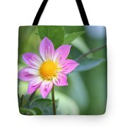 Purple And Yellow Dahlia Tote Bag