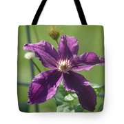 Purple Clemaits   # Tote Bag