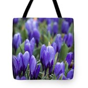 Purple Crocuses Tote Bag
