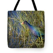 Purple Gallinule 2 Tote Bag
