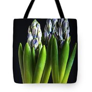 Purple Hyacinth Ready For Spring. Tote Bag