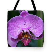 Purple Phalaenopsis Orchids Tote Bag
