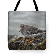 Purple Sandpiper 2 Tote Bag