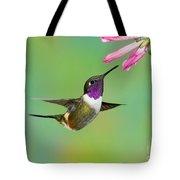 Purple-throated Woodstar Tote Bag