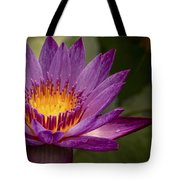Purple Tropical Water Lily Tote Bag