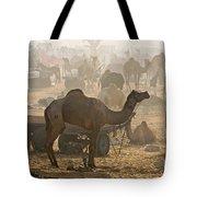 Pushkar Camel Fair - India Tote Bag