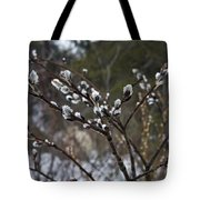 Pussy Willow In The Rain Tote Bag