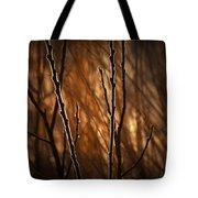 Pussy Willows In The Warm Sunlight Tote Bag
