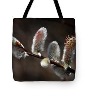 Pussy Willows Tote Bag by John Haldane
