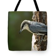 Pygmy Nuthatch Tote Bag