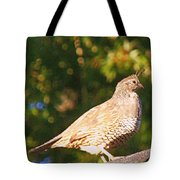 Quail Look Out Tote Bag