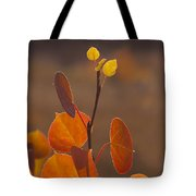 Quaking Aspen In Color   #3749 Tote Bag