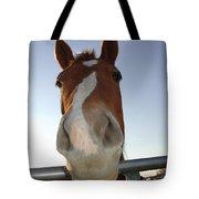 Quarter Horse Portrait Nosing Around Tote Bag