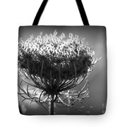 Queen Annes Lace - Bw Tote Bag