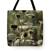 Queen Annes Lace - 1 Tote Bag