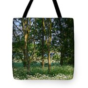 Queen Anne's Lace Makes A White Carpet In The Woods Near Rutland Tote Bag