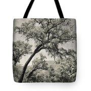 Quercus Suber Retro Tote Bag