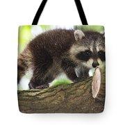 Raccoon Baby Tote Bag