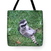 Raccoon Plays In The Grass Tote Bag