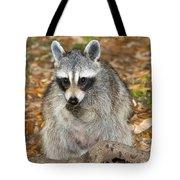 Raccoon Procyon Lotor Adult Foraging Tote Bag