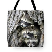 Raccoon Trio At Den Minnesota Tote Bag by Jurgen and Christine Sohns