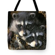 Raccoon Young Procyon Lotor In Tree Tote Bag