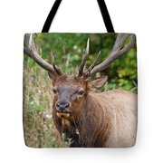Racked Roosevelt Elk Tote Bag
