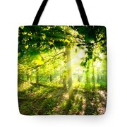 Radiant Sunlight Through The Trees Tote Bag