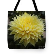 Radiant Yellow Dahlia Tote Bag