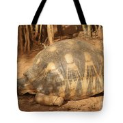 radiated tortoise from Madagascar Tote Bag