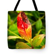 Rain Drops On Colorful Leaf Tote Bag