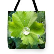 Raindrops On Leaves Tote Bag