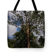 Rainbow Eucalyptus - Tall Proud And Beautiful Tote Bag