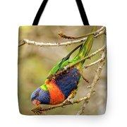 Rainbow Lorikeet 02 Tote Bag