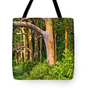 Rainbow Row - Eucalyptus Trees Of Maui Tote Bag