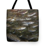 Rainbow Trout Fry Tote Bag
