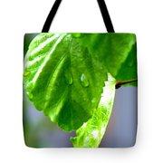 Raindrop On Roses Tote Bag