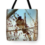 Raptor Perched Tote Bag