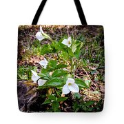 Rare Great White Trilliums Tote Bag