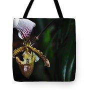 Rare Orchid - Paphiopedilum Gratrixianum Tote Bag