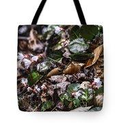 Rare Spring Beauty Tote Bag