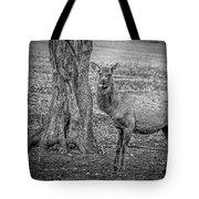 Raspberry Elk Black And White Tote Bag