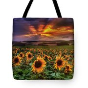 Rays Of Sunflowers Tote Bag
